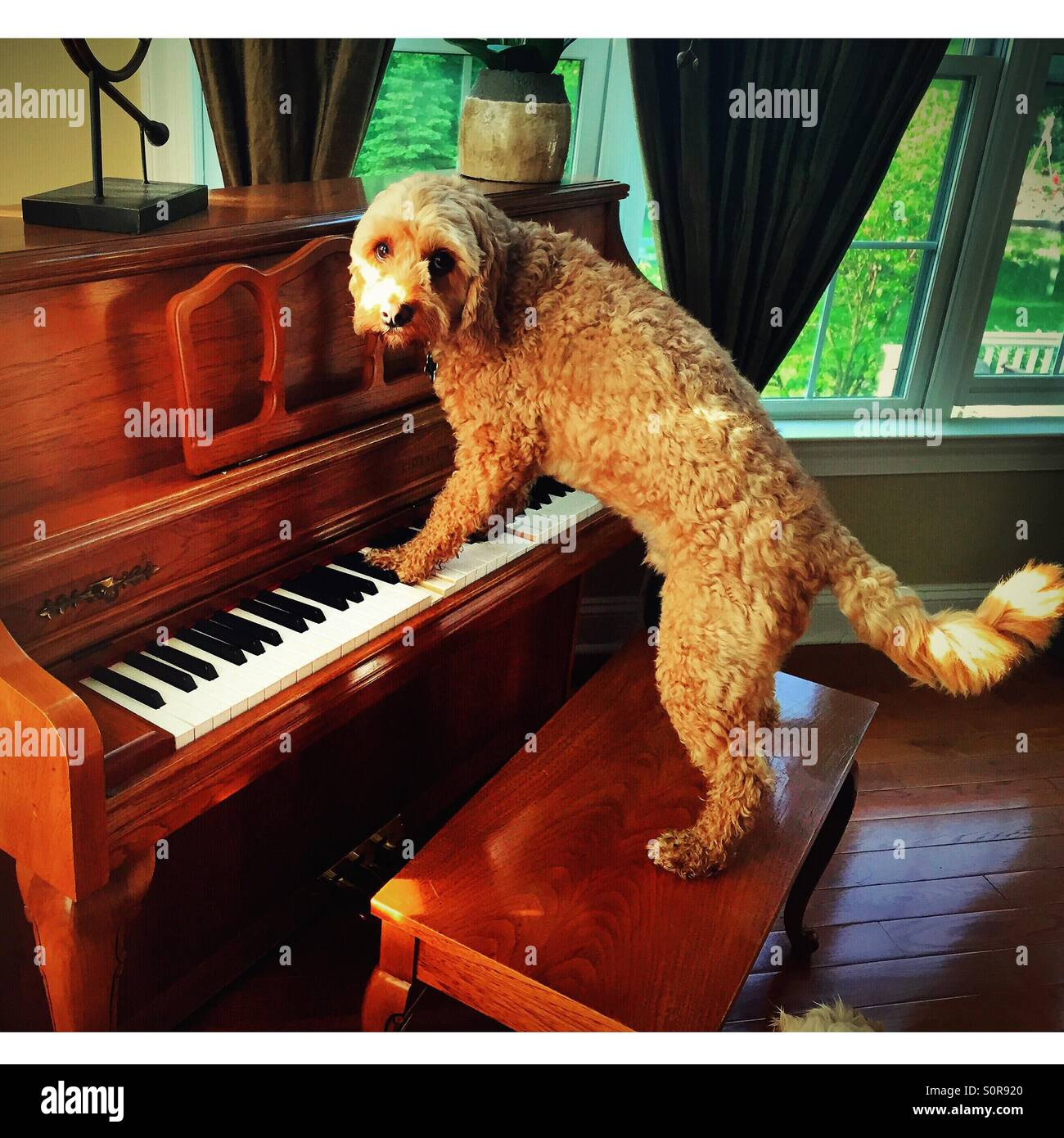 Tickling the ivories