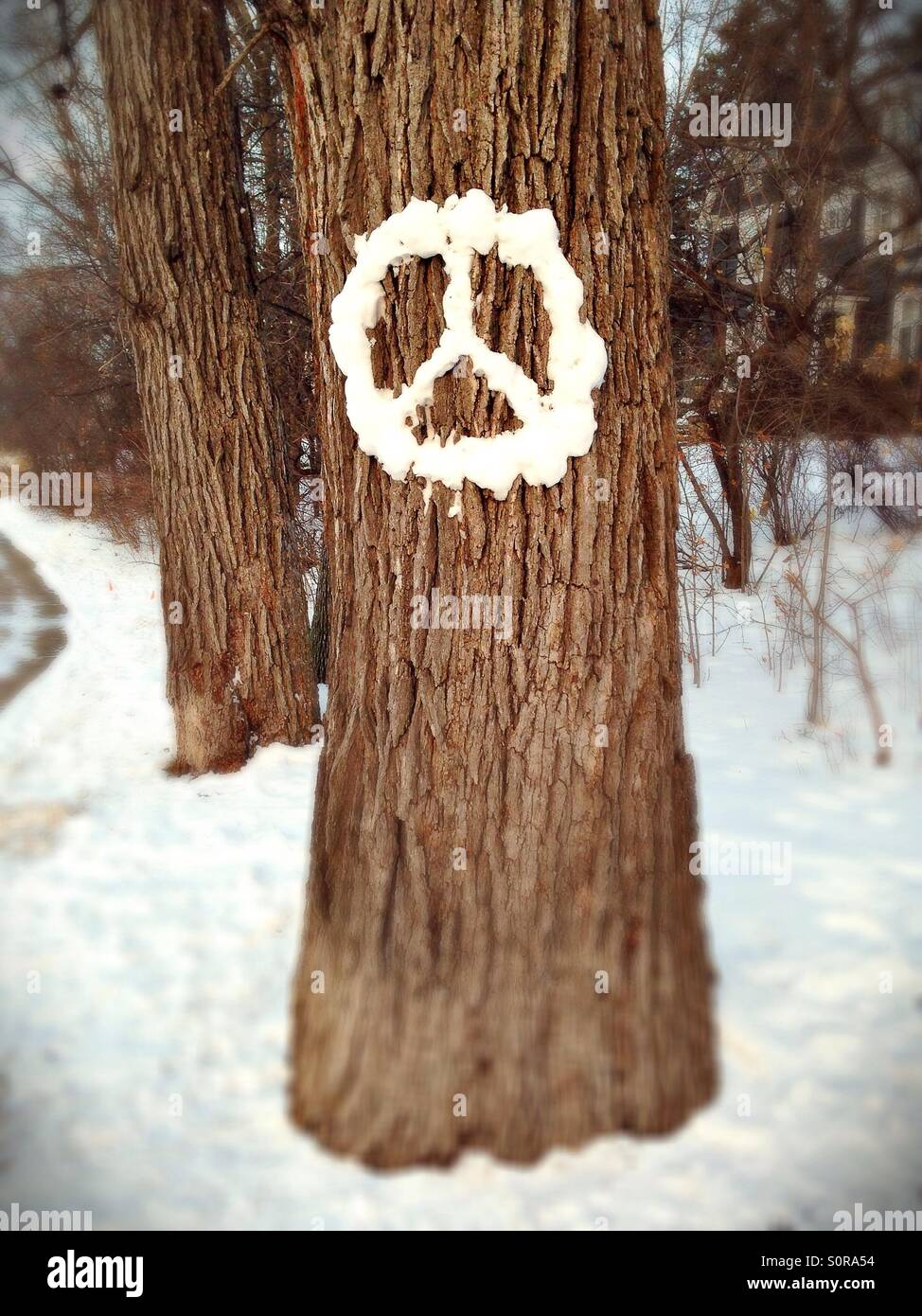 A peace sign made of snow on a tree. - Stock Image