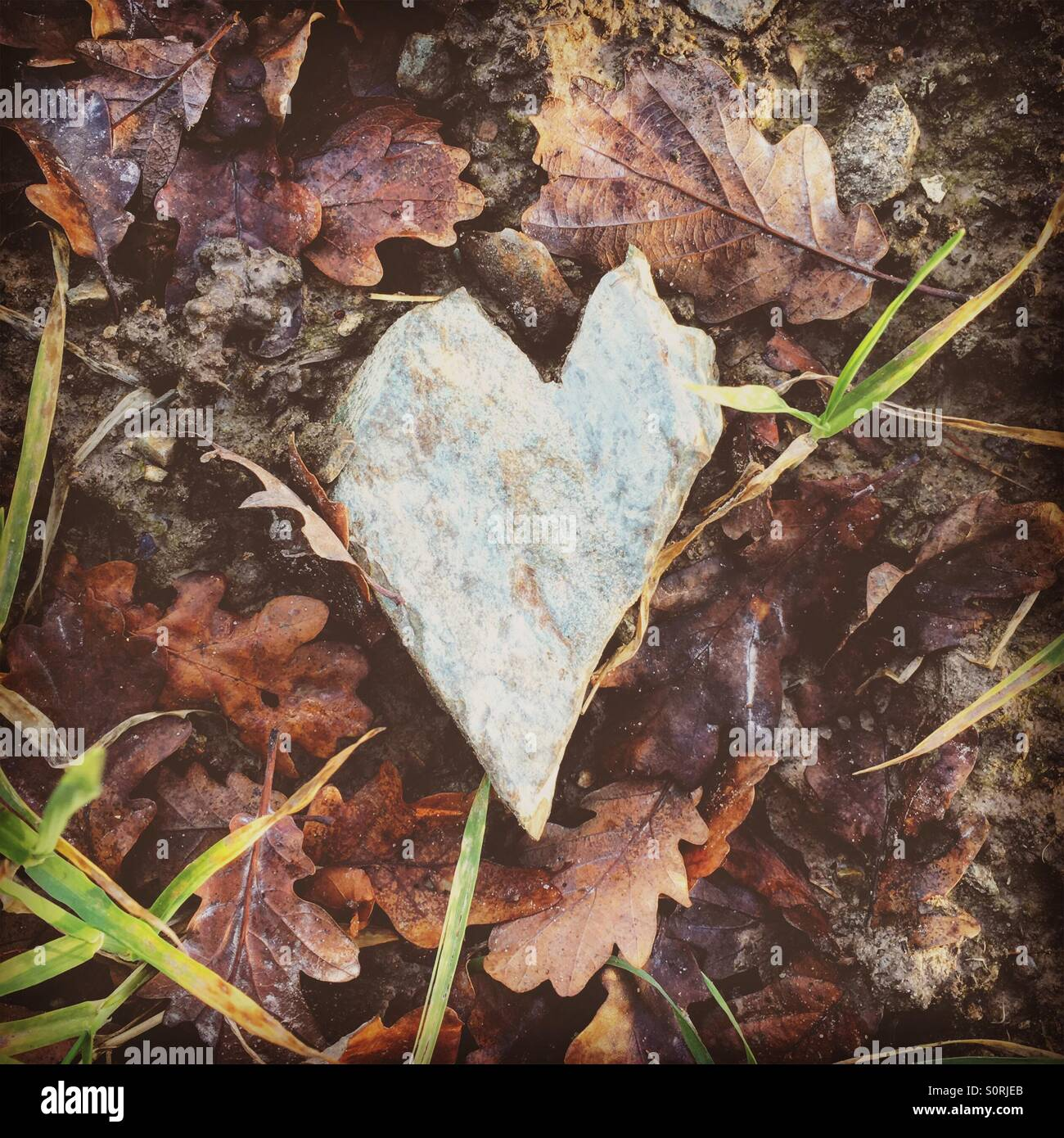 Stone heart on leaves - Stock Image