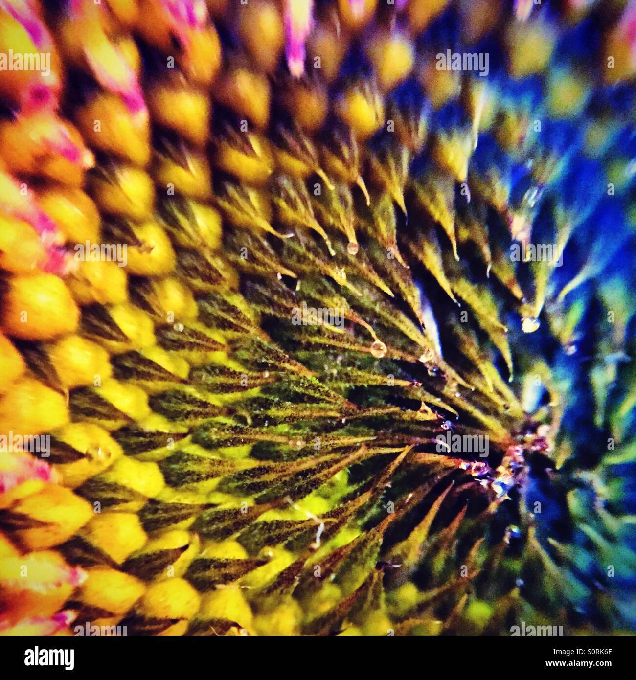 fibonacci nside of a colorful flower stock photo 310306599 alamy