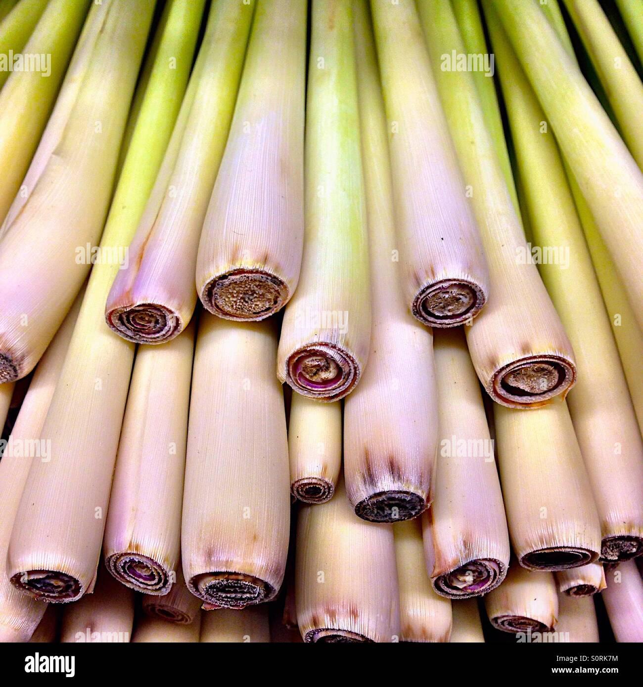 Lemongrass stalks - Stock Image