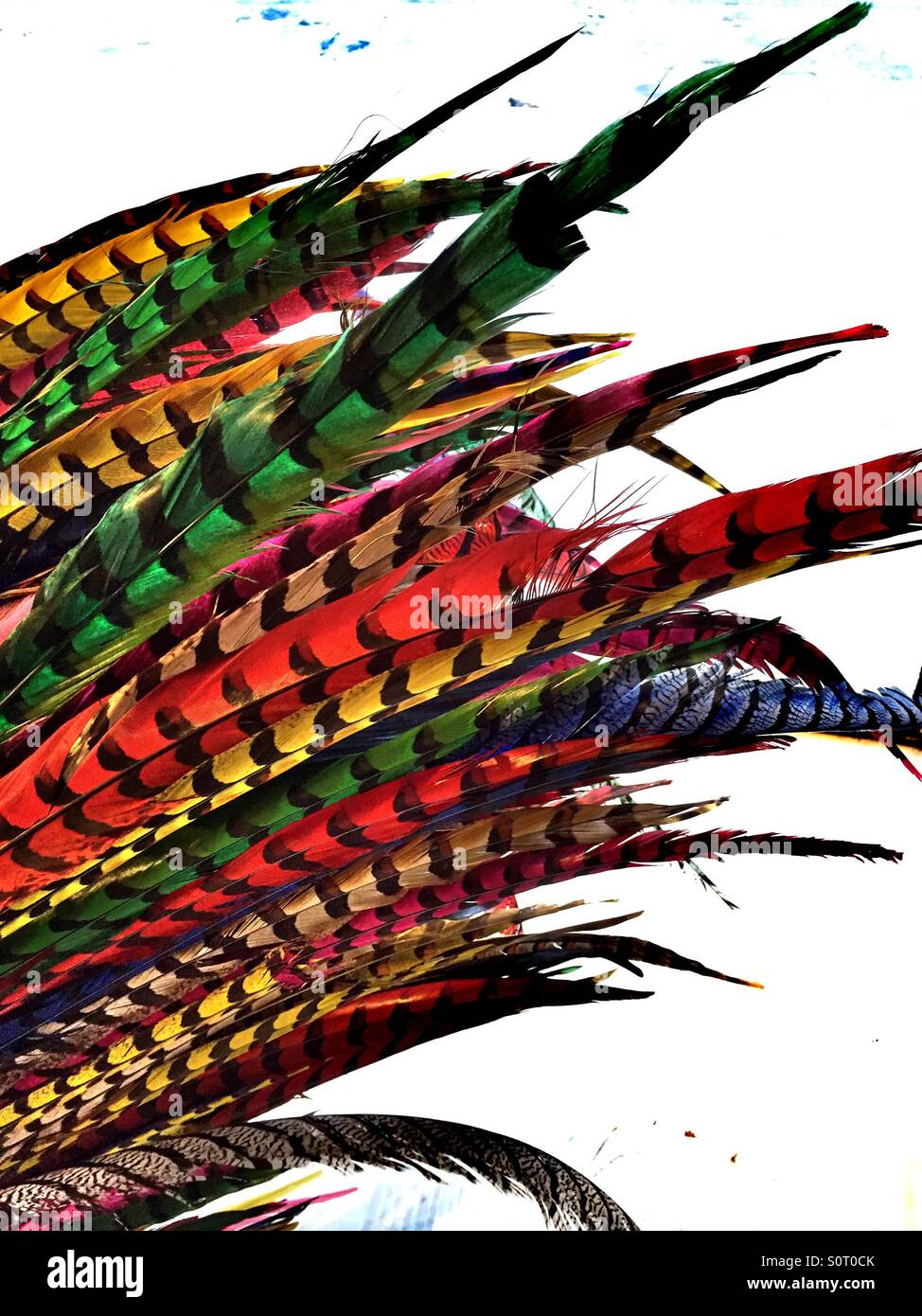 Detail of bunch of feathers of different colors. - Stock Image