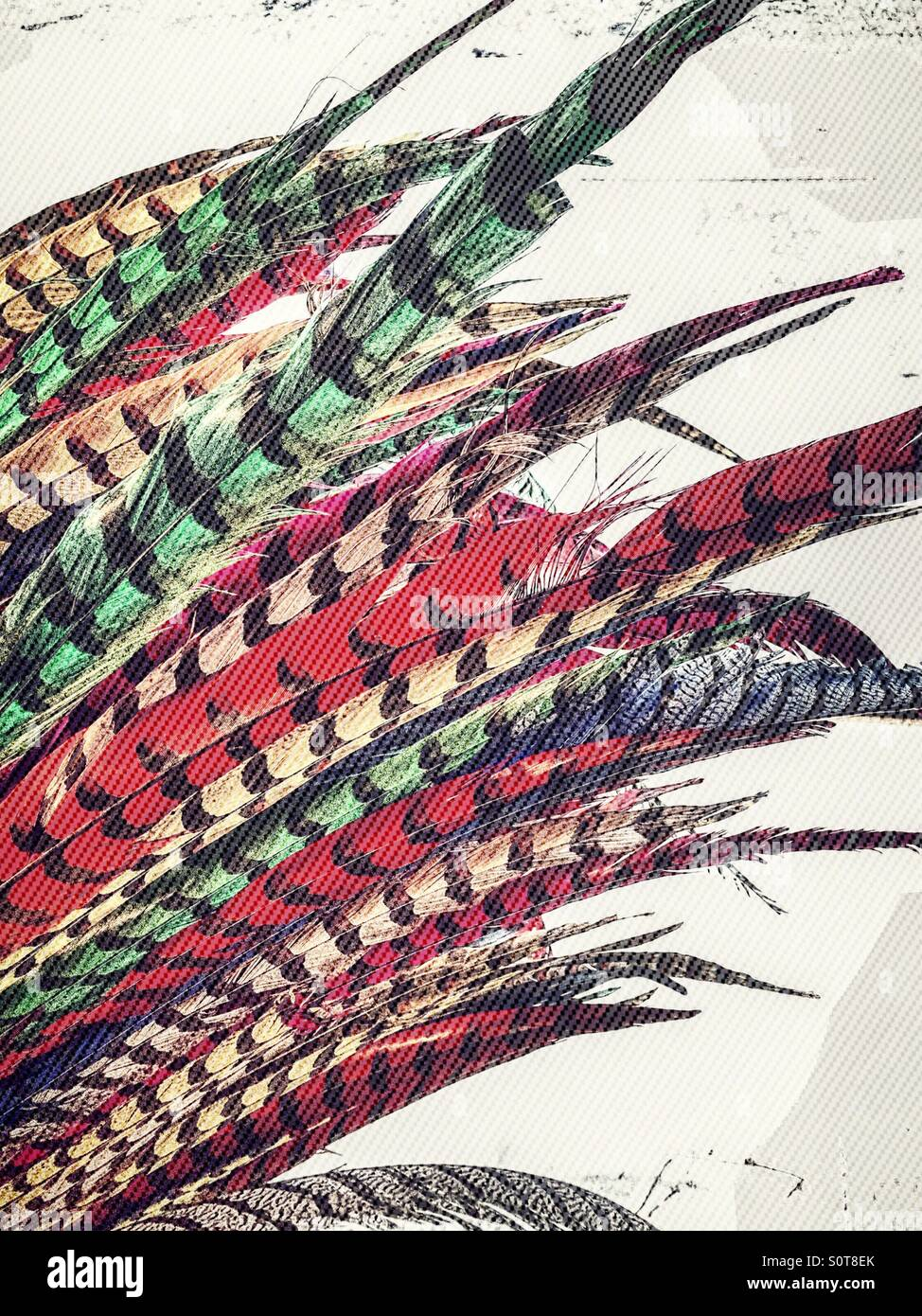 Feathers - Stock Image