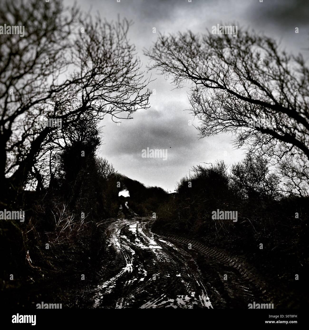 Dark and wintry country lane in Devon Stock Photo