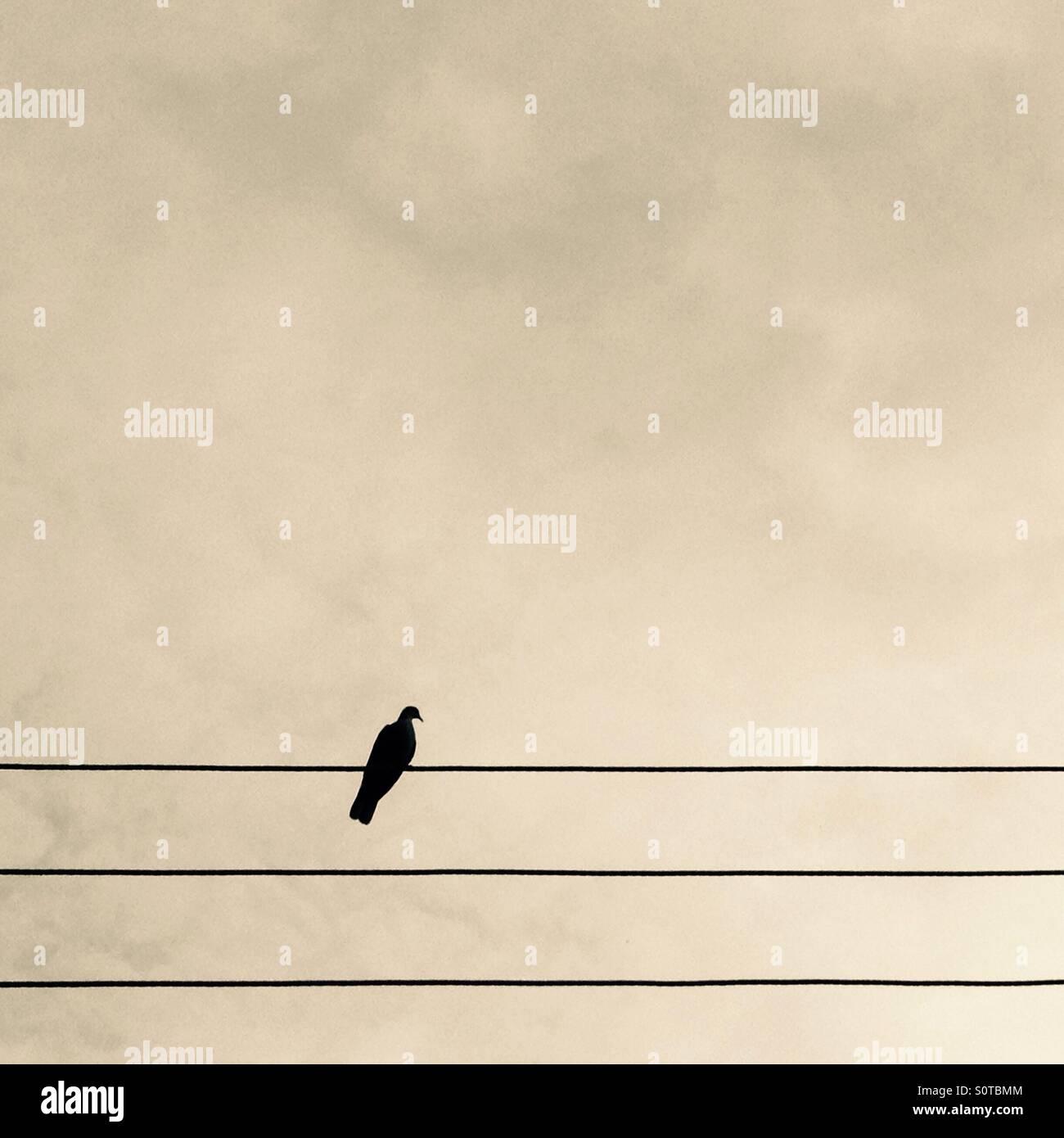 Bird Sitting On Telephone Wire Stock Photos & Bird Sitting On ...