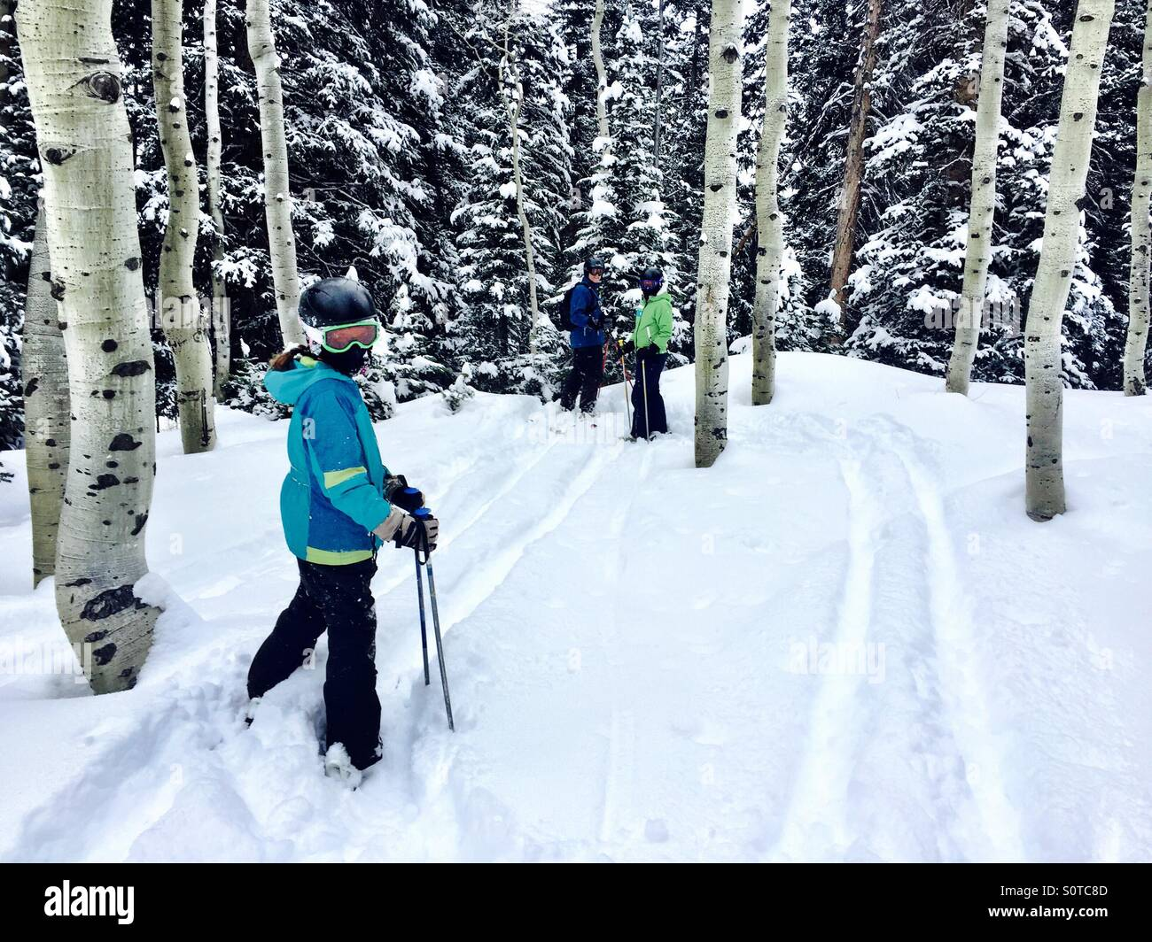 3 family members in ski gear prepare to ski through and Aspen Grove. - Stock Image