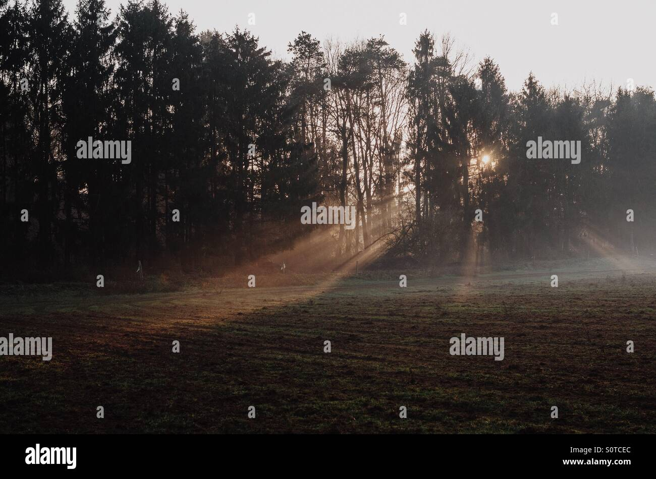 Light beaming through the forest - Stock Image