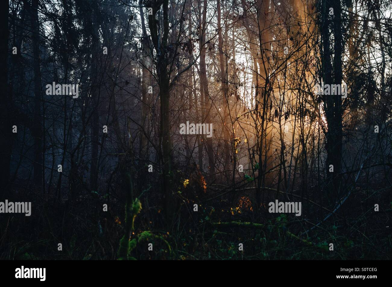 Light. In the forest - Stock Image