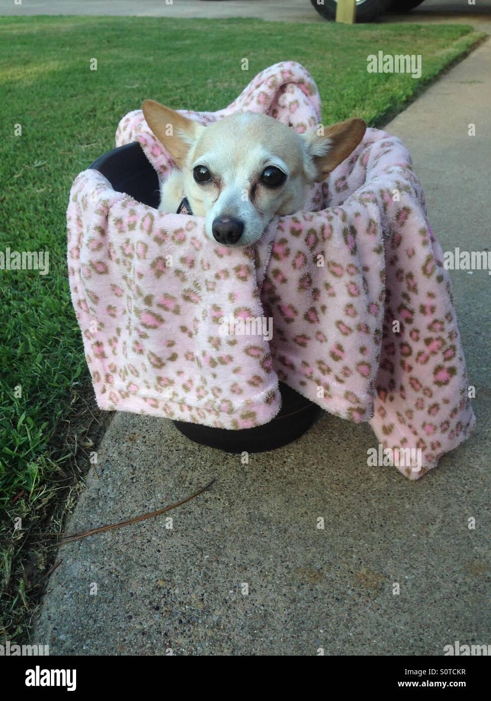 Comfy dog - Stock Image