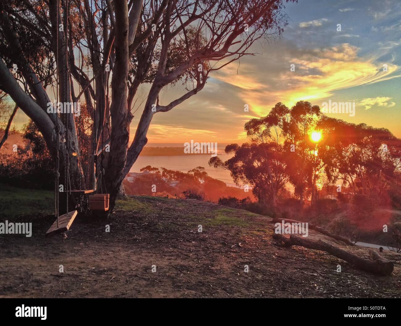 Set of swings on a tree overlooking the ocean at sunset, La Jolla, California, USA - Stock Image