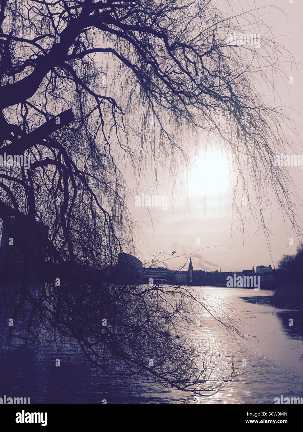 View of a tree, the sun and Sankt Jørgens Lake, a lovely oasis in the heart of Copenhagen. - Stock Image