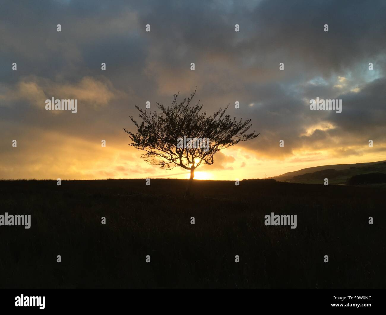 'Burning Bush' - Sunset behind a small tree near Kilwaughter in Co. Antrim, N. Ireland. - Stock Image