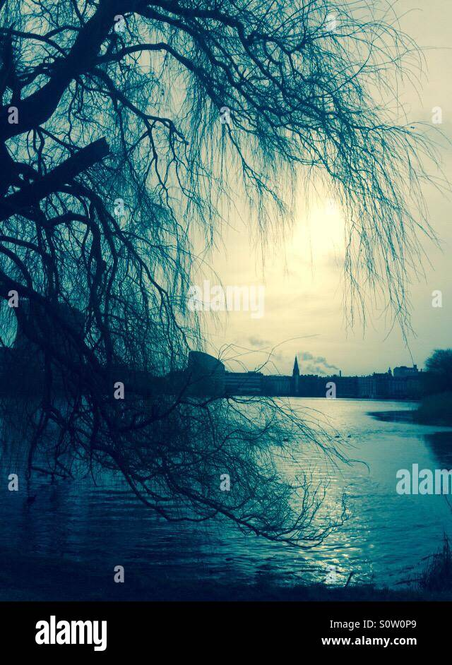 A tree, the sun and Sankt Jørgens Lake in the heart of Copenhagen. - Stock Image
