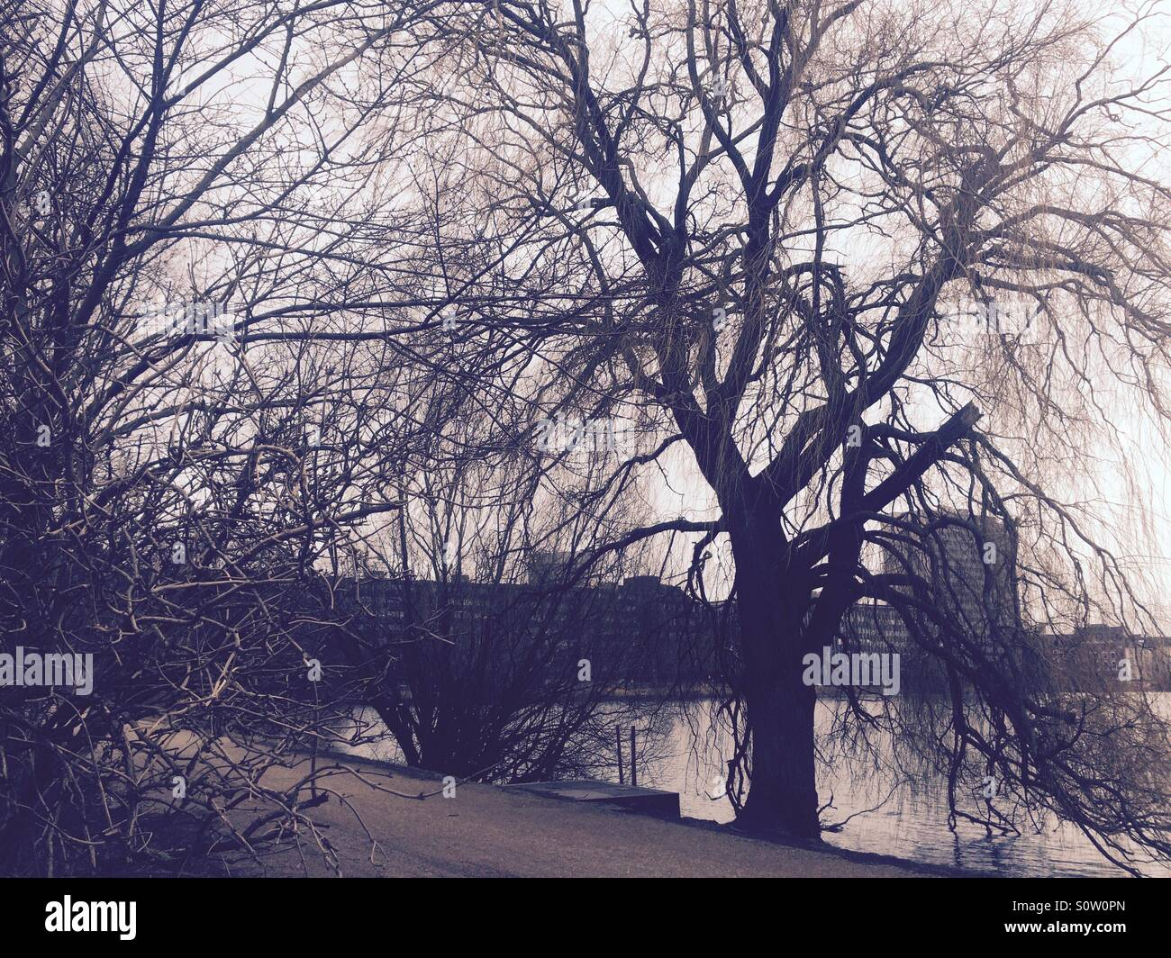Trees, a bicycle path and a lake in Copenhagen. - Stock Image