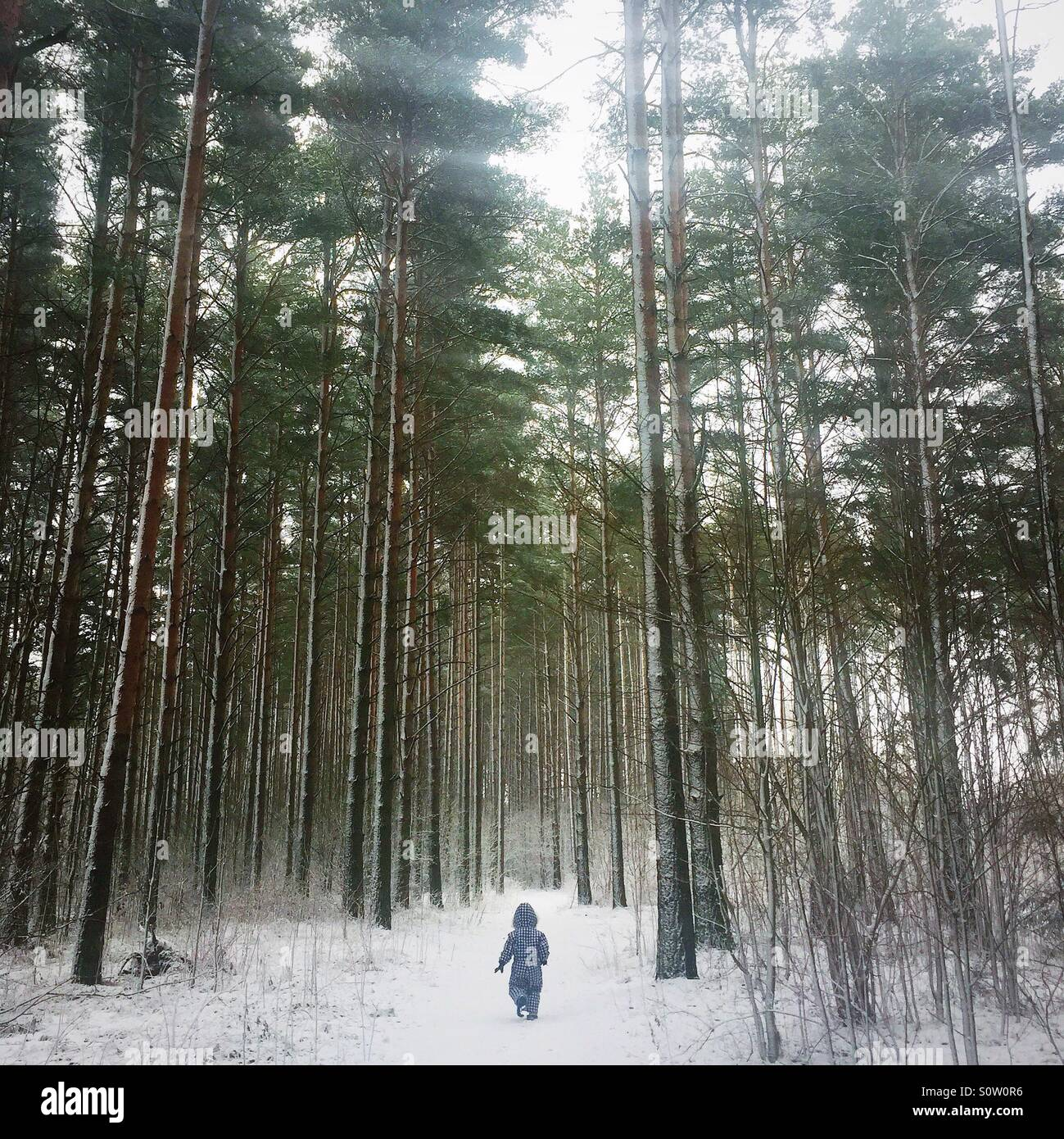 little child in the woods in wintertime - Stock Image