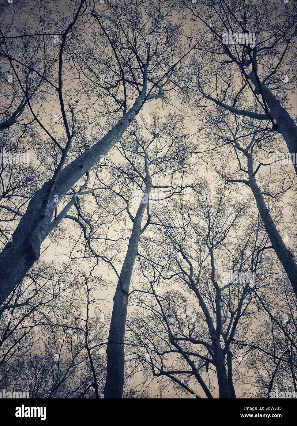 Looking up branches of trees in La Devesa park, Girona, Catalonia, Spain Stock Photo