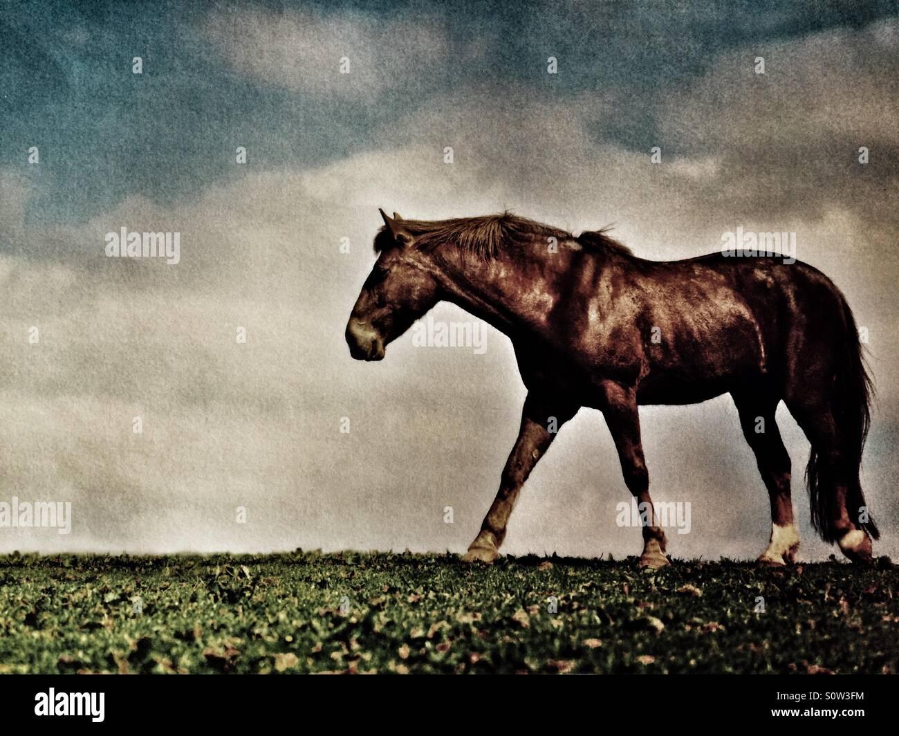 Horse walking through a winter field - Stock Image