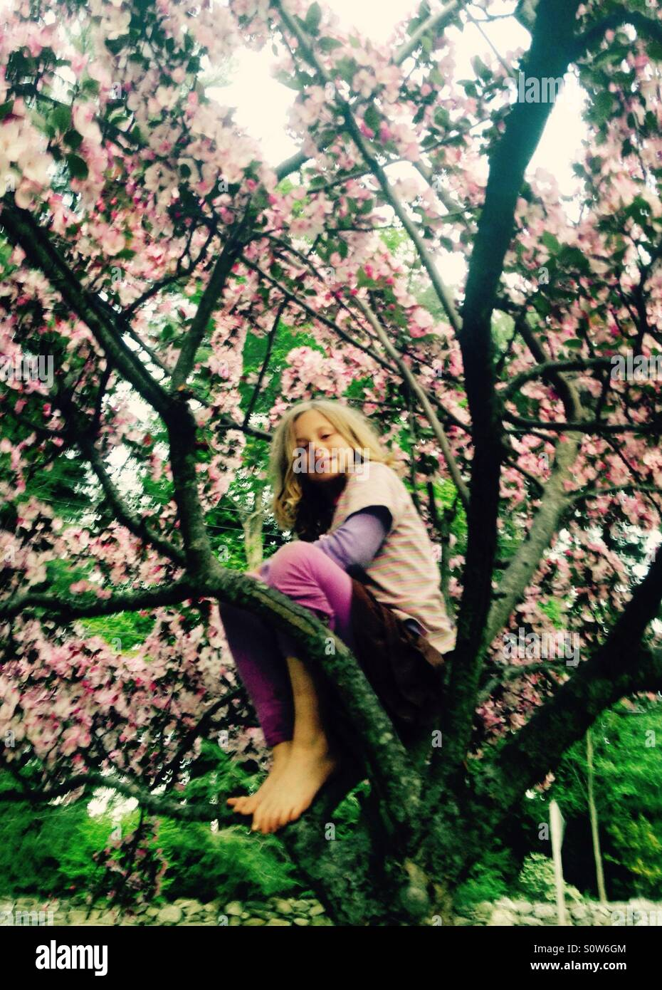 Girl climbs blooming ornamental cherry tree in spring - Stock Image