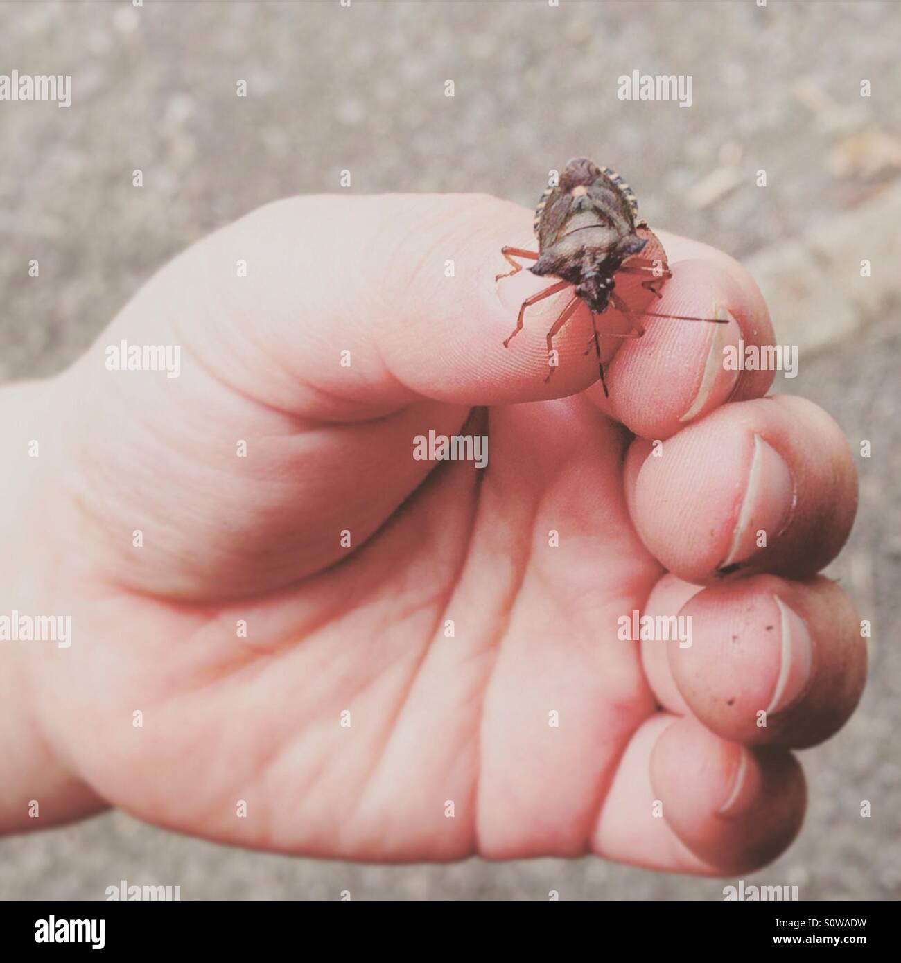 Child holding a bug - Stock Image