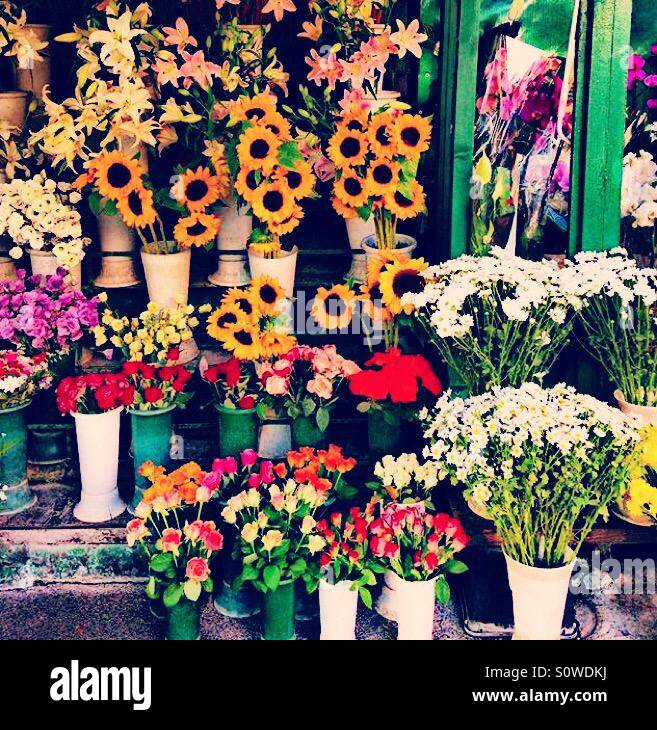 Fiori Italia.Fiori Roma Italia Flores Stock Photo 310346166 Alamy