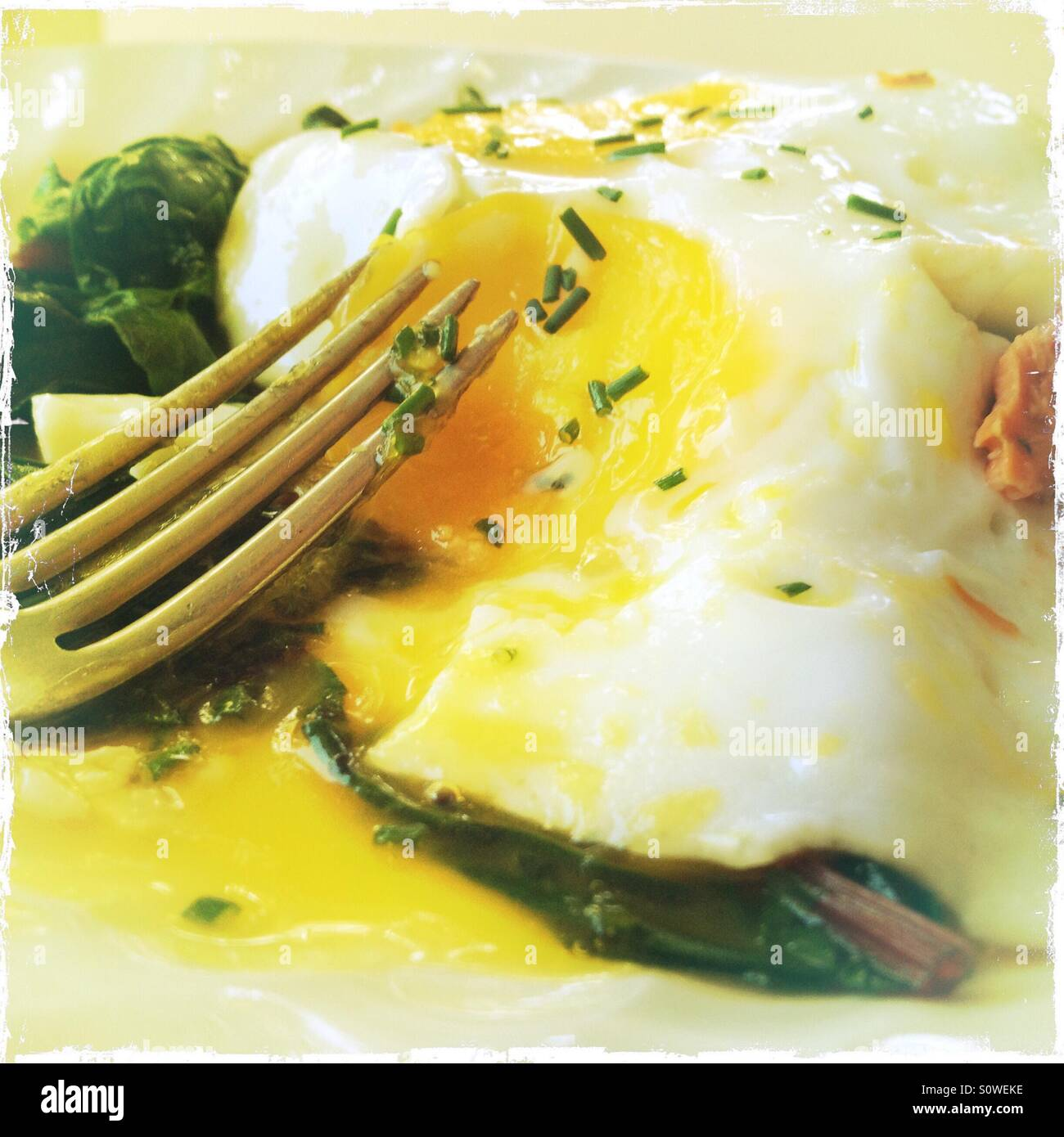 Fried egg on greens - Stock Image