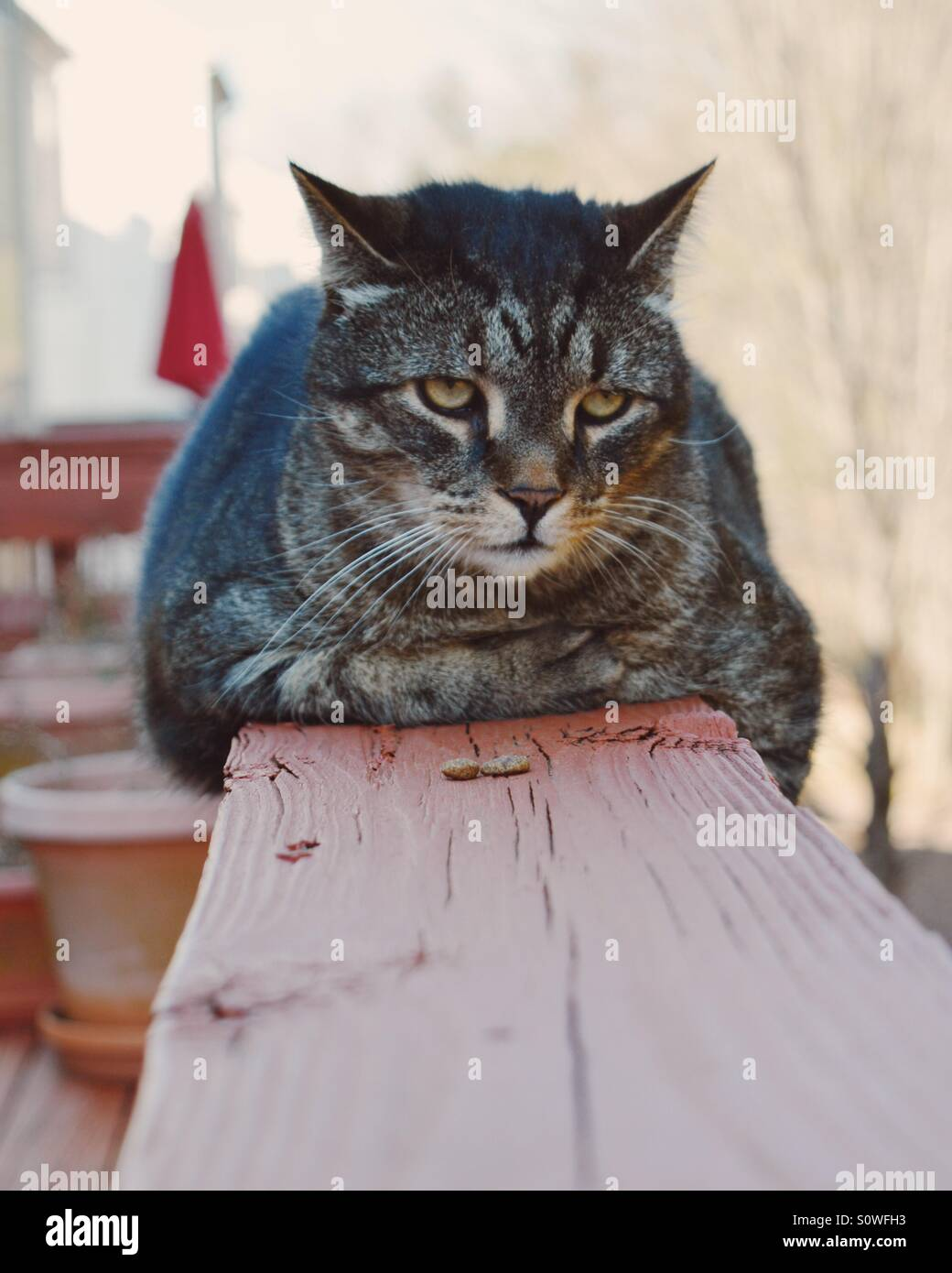 Cat on a porch egde - Stock Image