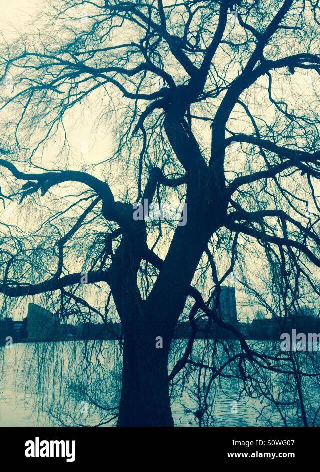 A tree by Sankt Jørgens lake, in the heart of Copenhagen. - Stock Image