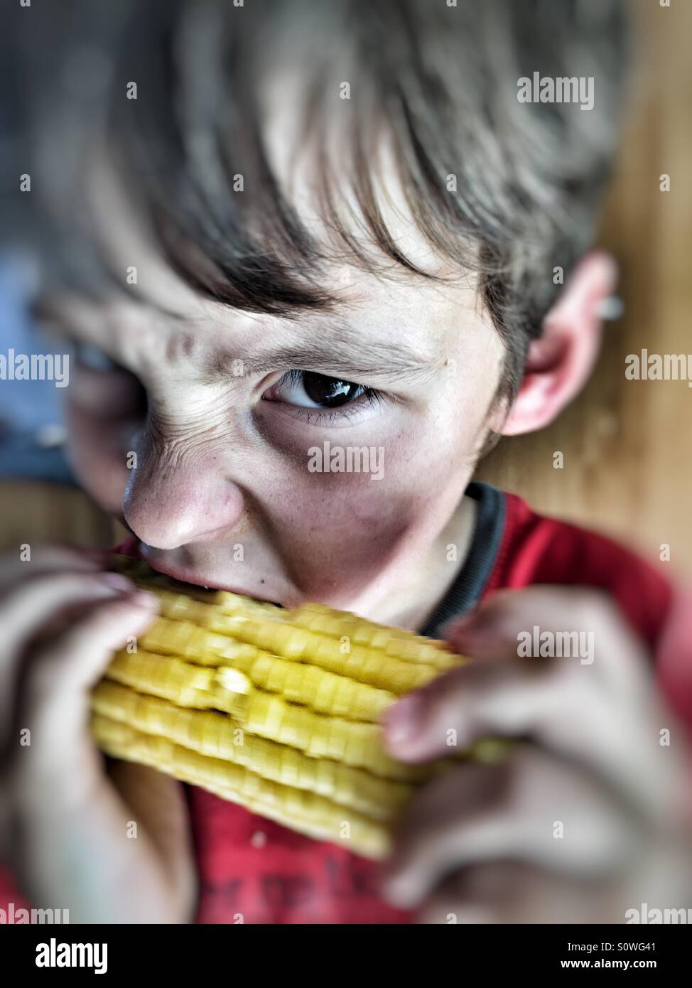 Boy eating corn on the cob - Stock Image