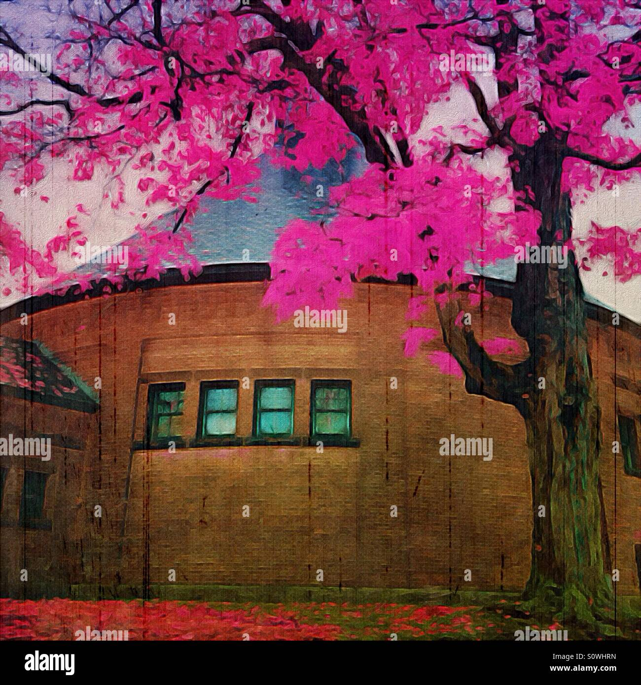 Round Building with Pink Flowering Tree - Stock Image