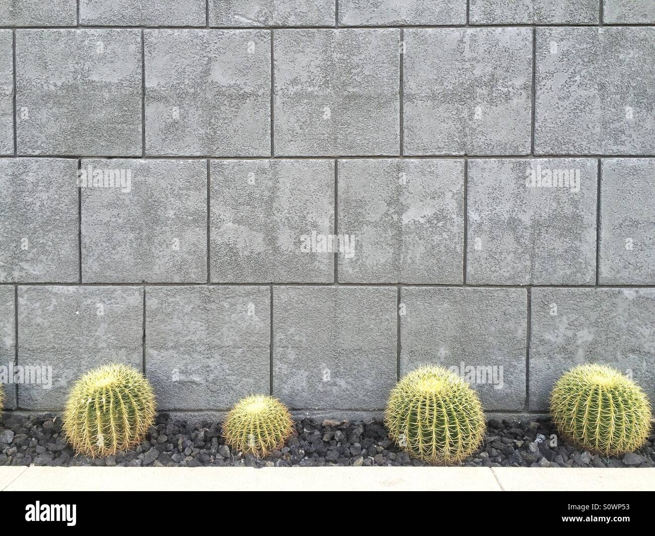 Cactus in front of building, Palm Springs, California Stock Photo