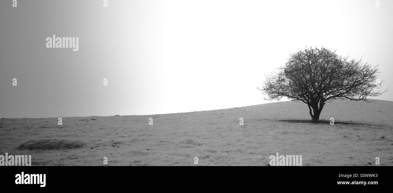 Lonely tree on Pitstone Hill, Ashridge, UK - Stock Image