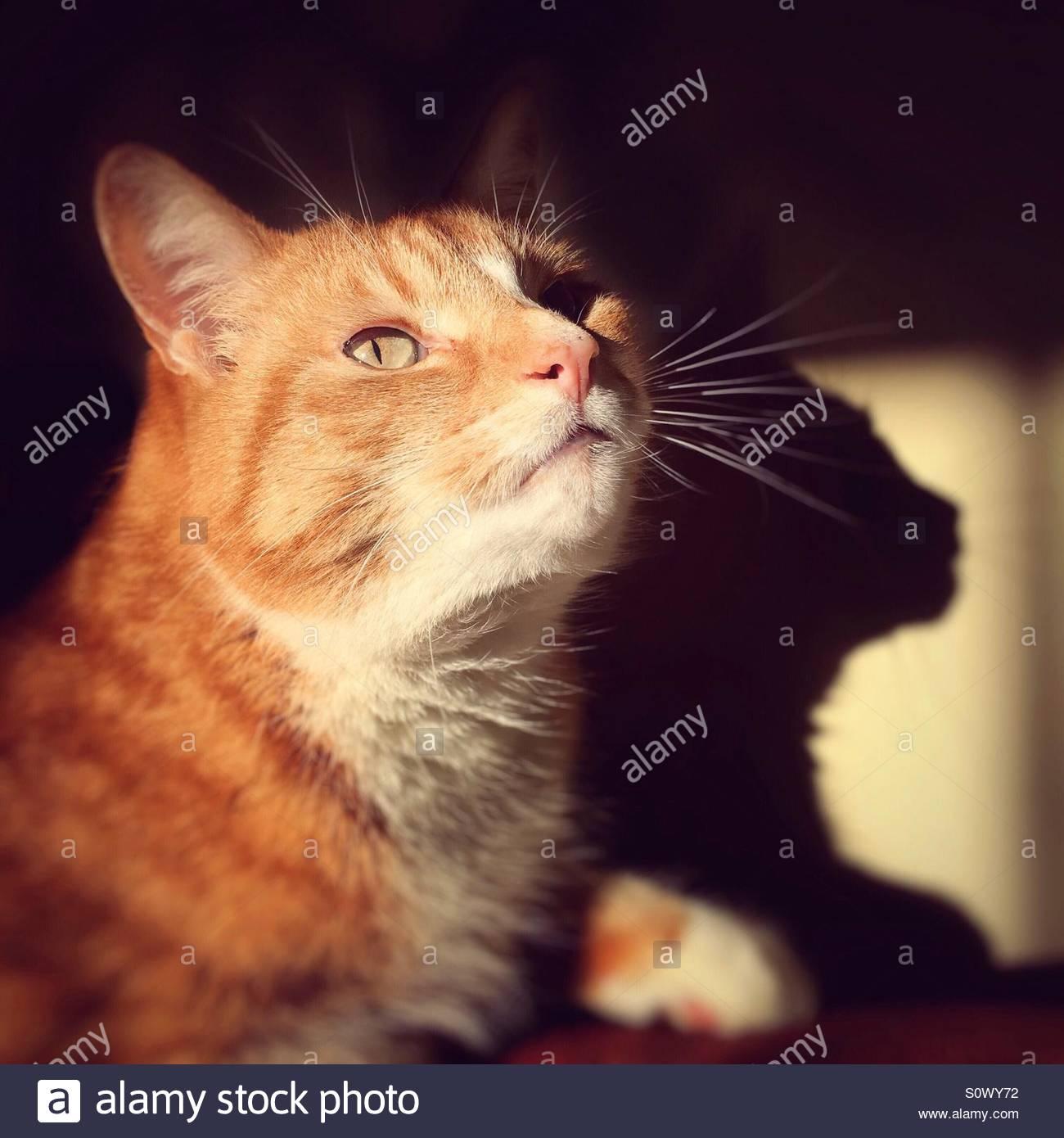 Cat Portrait - Stock Image