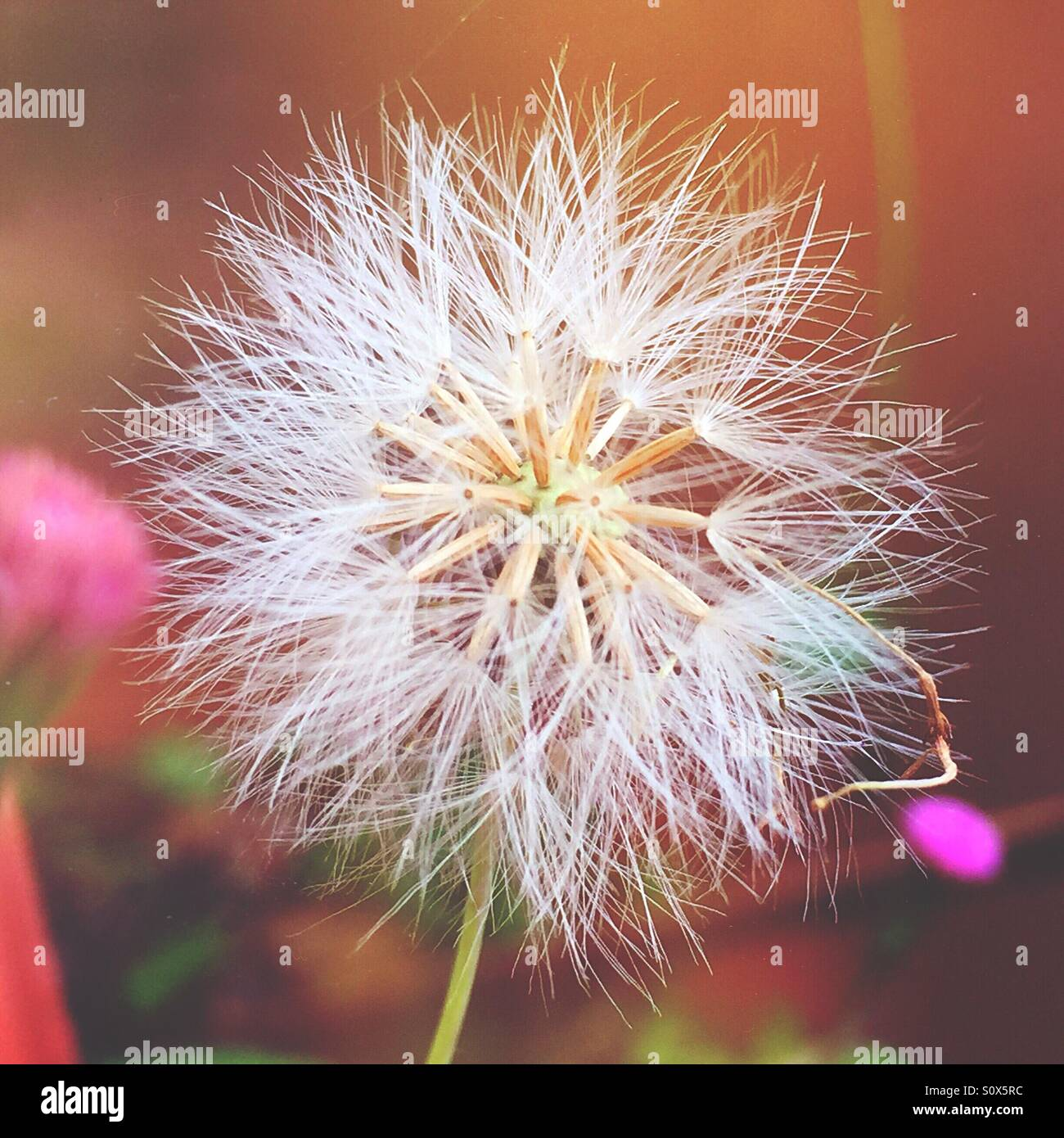 The flower start to bloom - Stock Image