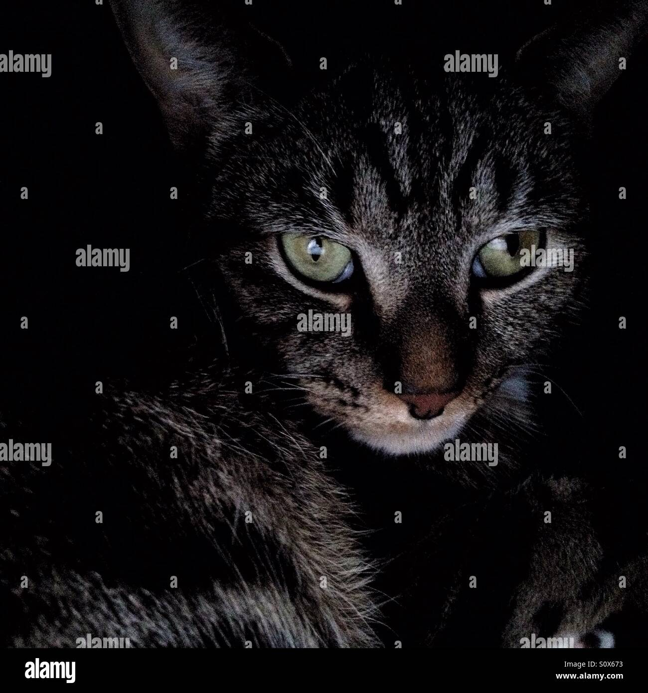 Cat in shadow. - Stock Image