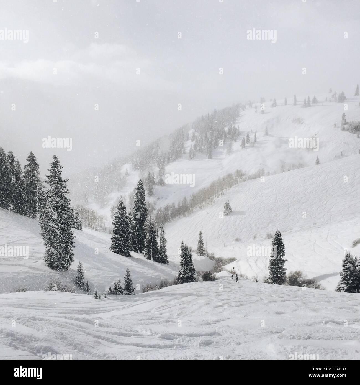 Skiing in Powder Stock Photo