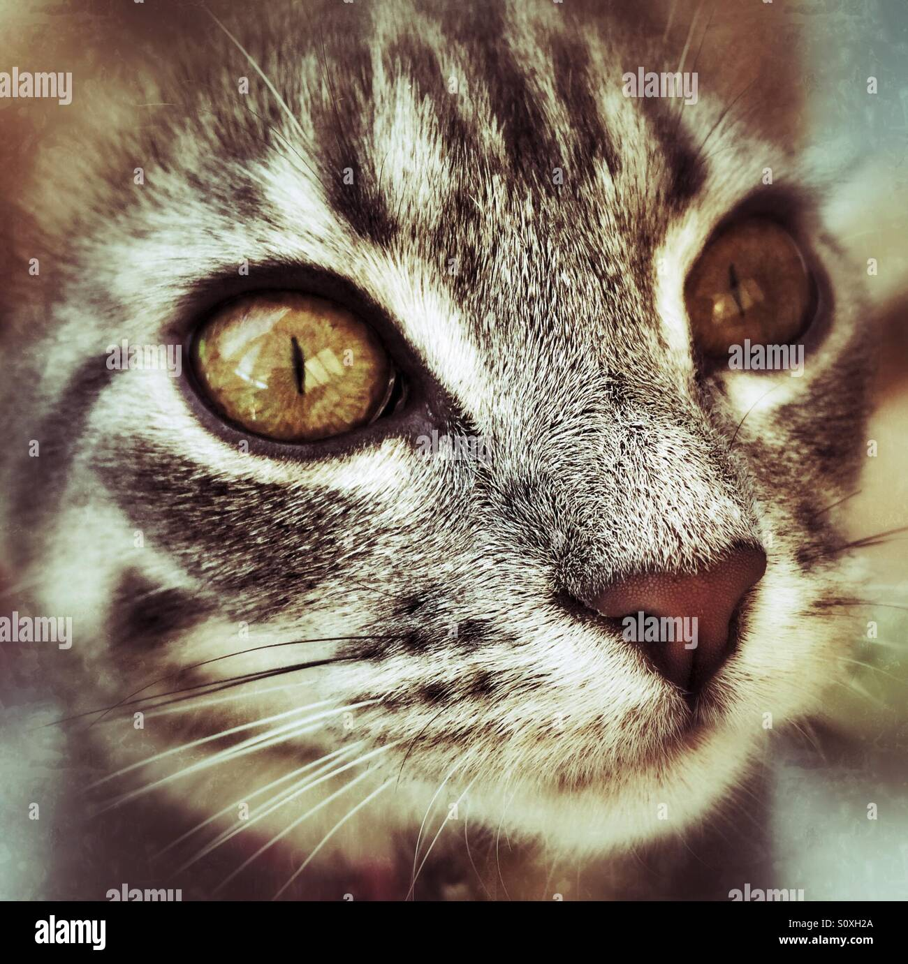 A close up of a beautiful tabby cat - Stock Image
