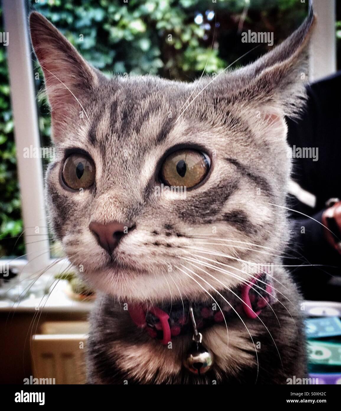 A close up of a beautiful cat - Stock Image