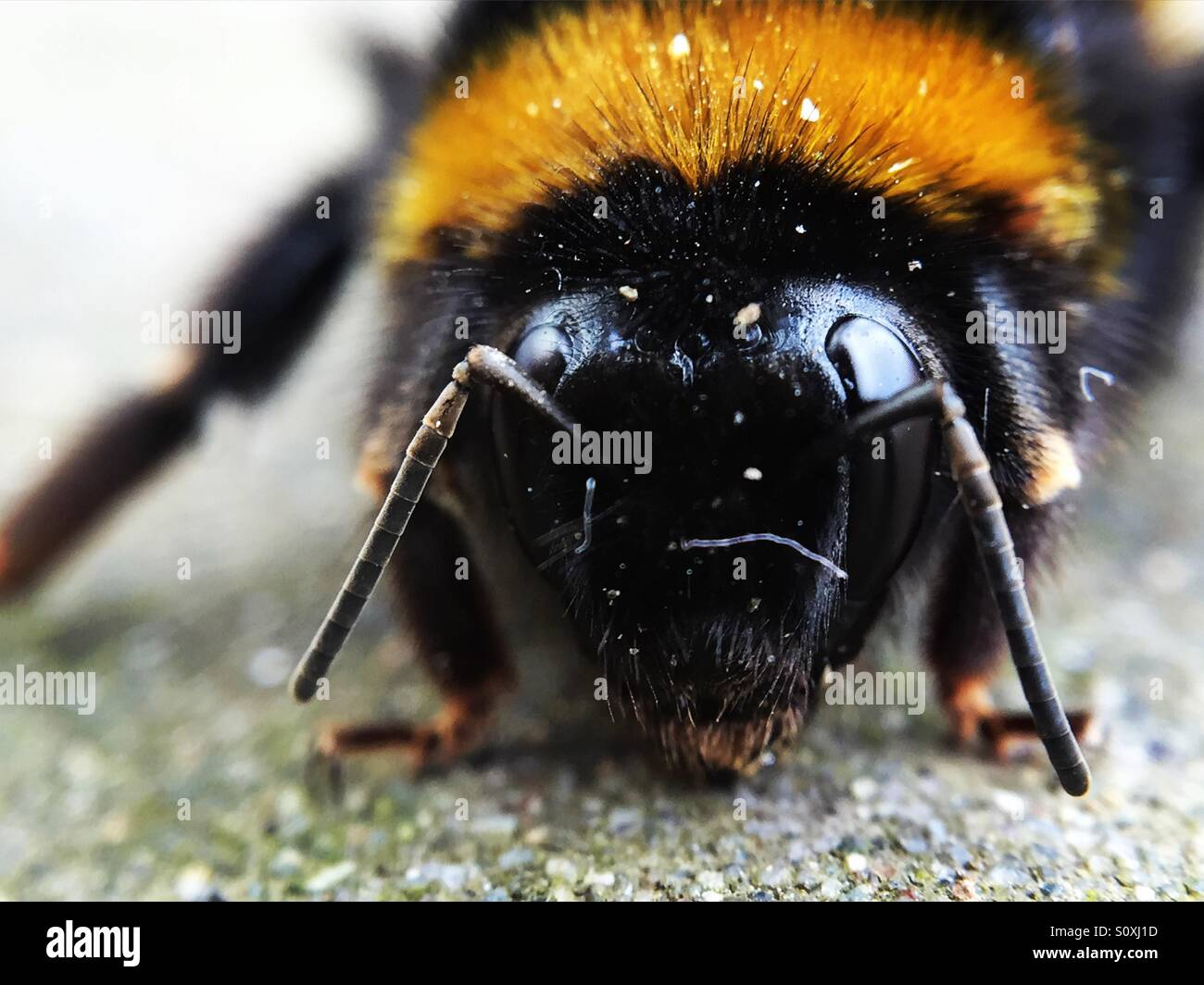 Little big bee Stock Photo