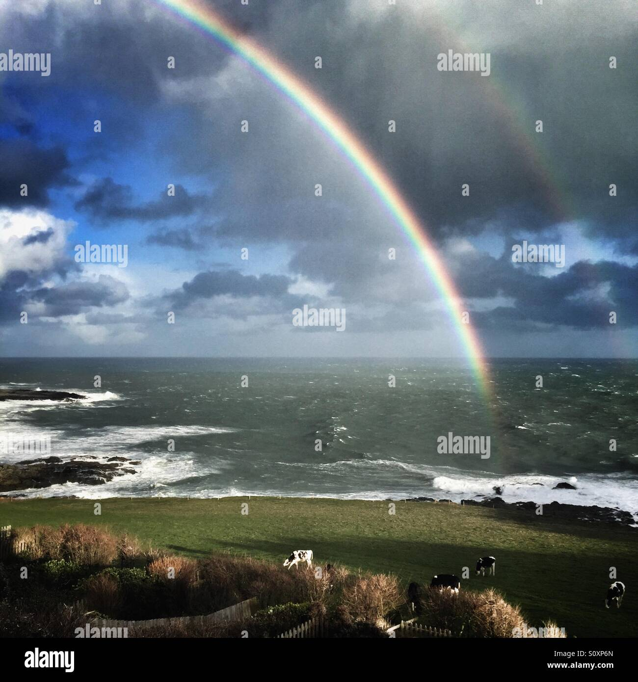 Double rainbow over field of cows near the sea in south Devon Stock Photo