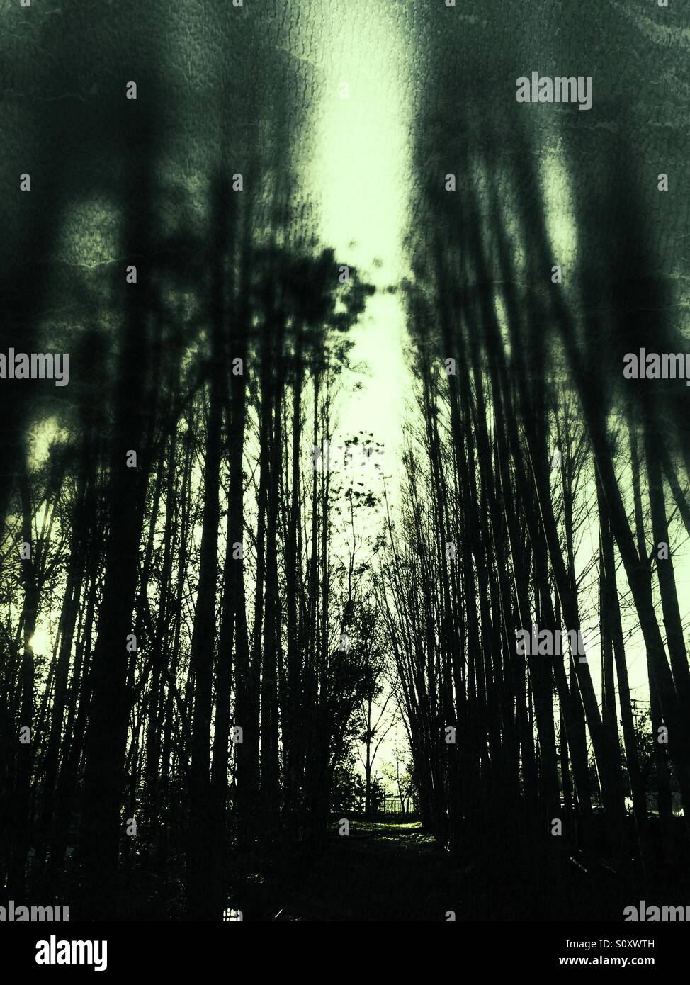 Gloomy path - Stock Image