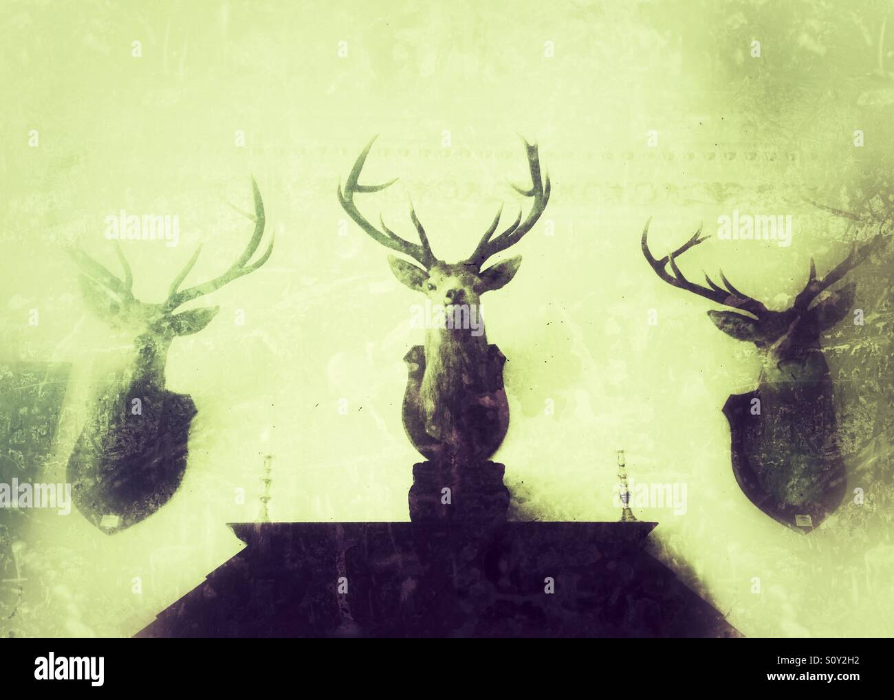 Antlers On Wall Stock Photos & Antlers On Wall Stock Images - Alamy