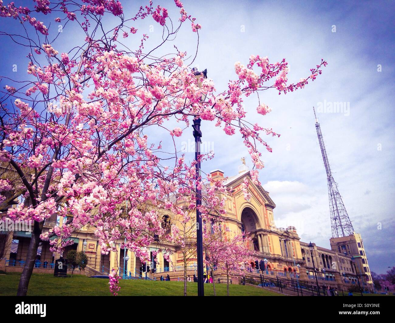 Blossom at Alexandra Palace, North London - Stock Image