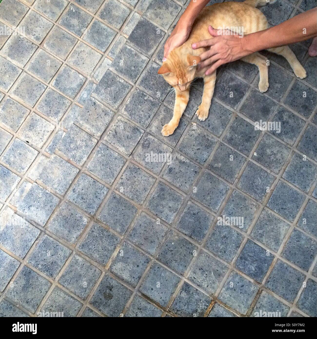 Person petting an orange cat. - Stock Image