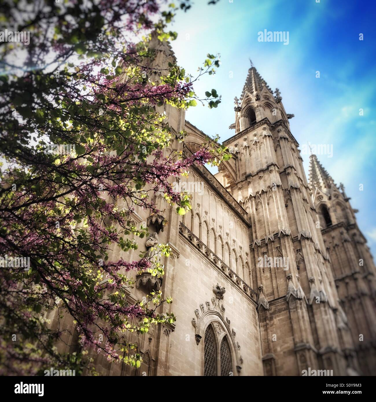 Spring time in Parma, Majorca. Stock Photo