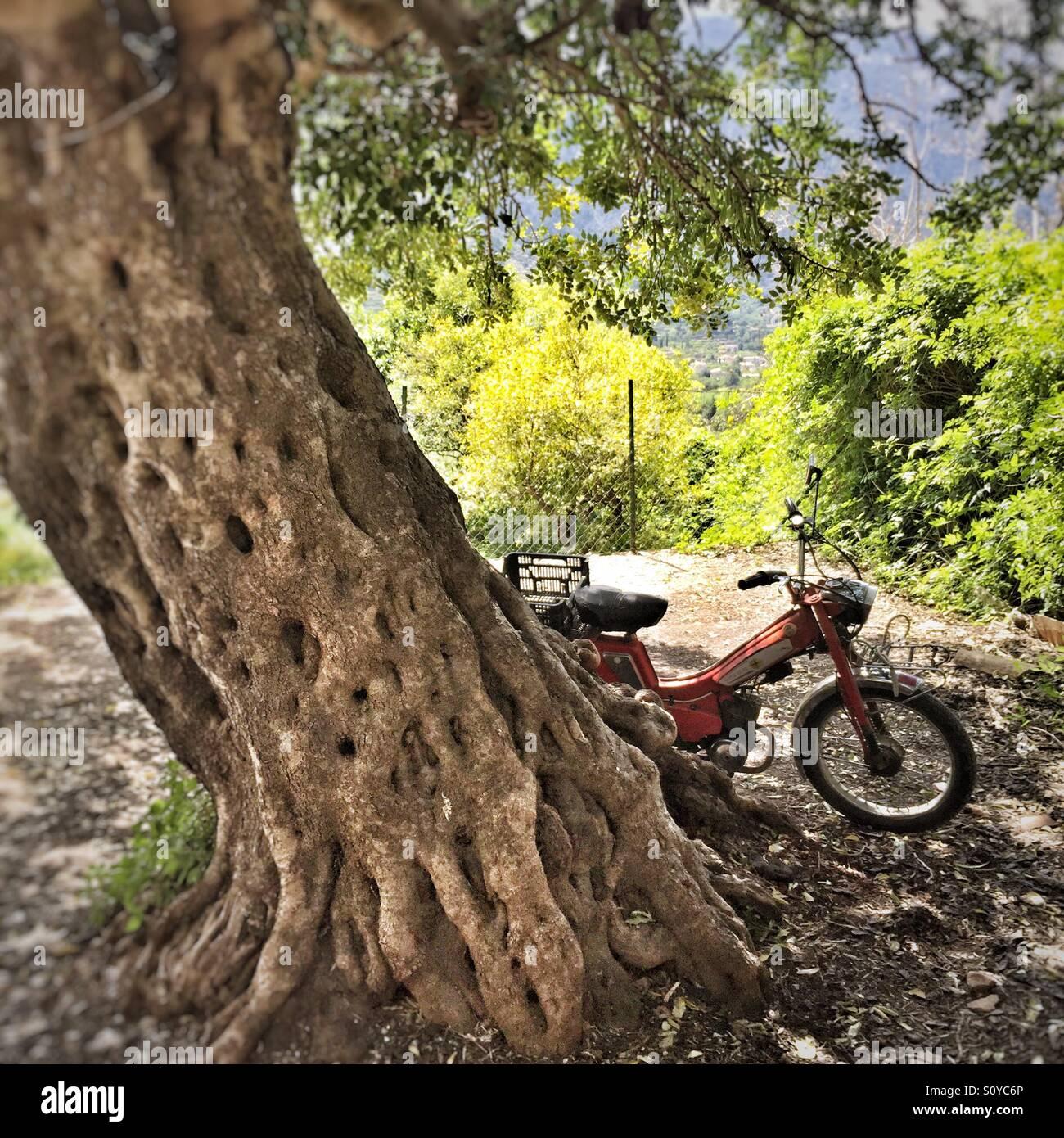 Old motorbike under Carob Tree in Mallorca Stock Photo