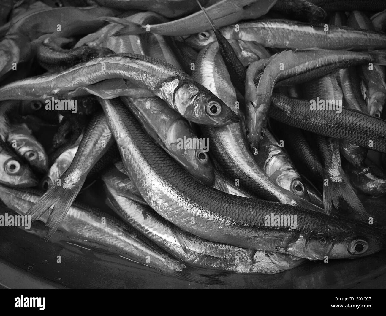 Fish at a fish market in South America - Stock Image