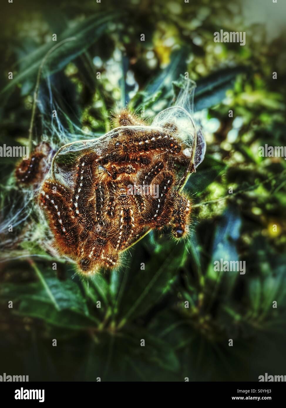 Caterpillars - Stock Image