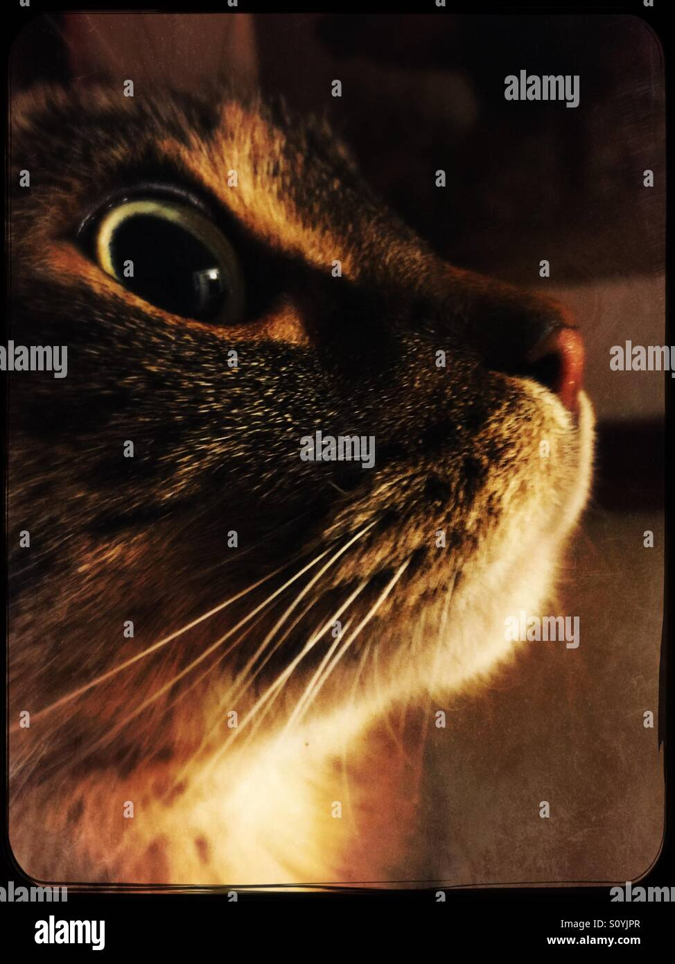Entranced tabby cat in profile - Stock Image