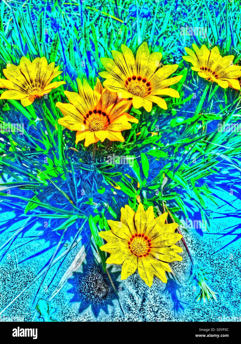 Painterly image of yellow flowers - Stock Image