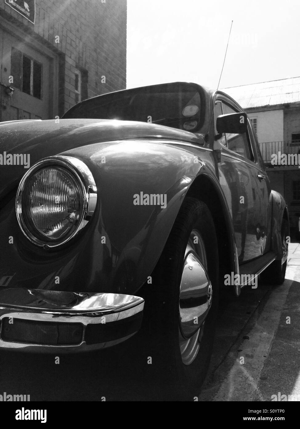 Black and white beetle - Stock Image